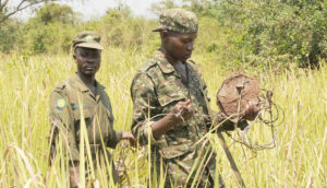 Rangers remove a snare