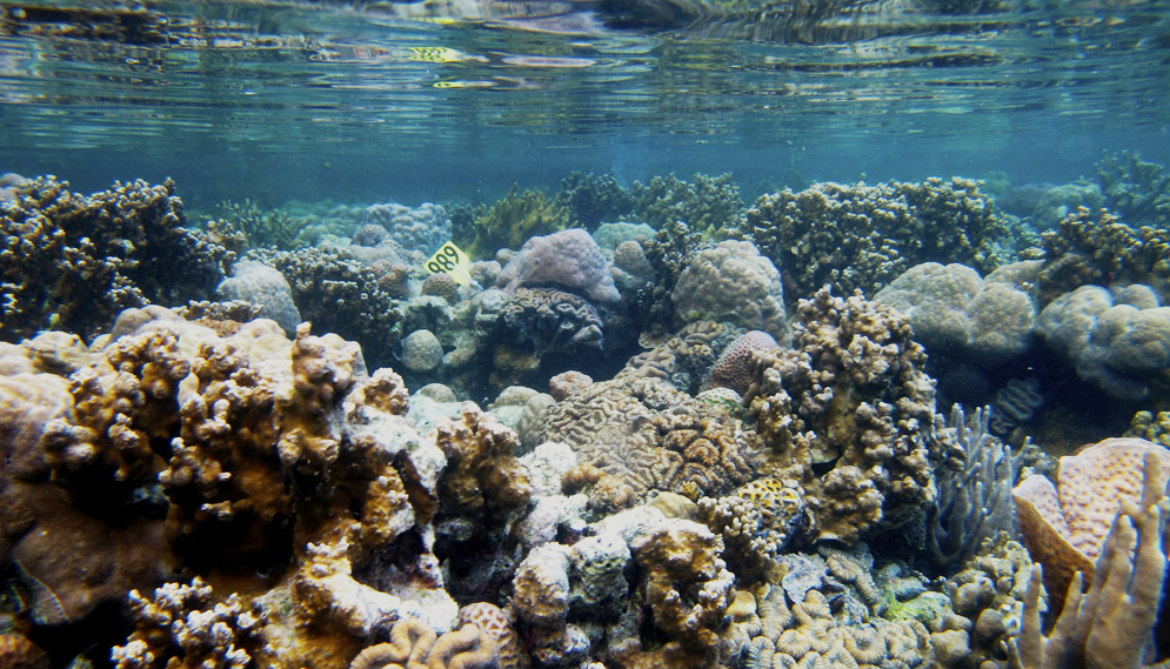 Why is this reef thriving in acidic water?