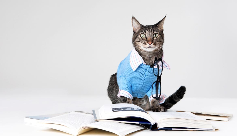 cat scholar 1170.