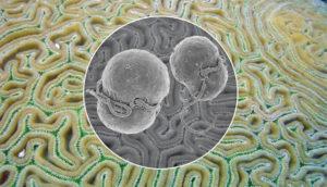 coral & invasive algae