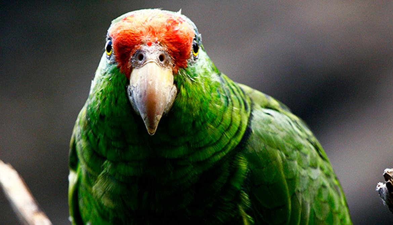 mexico endemic bird