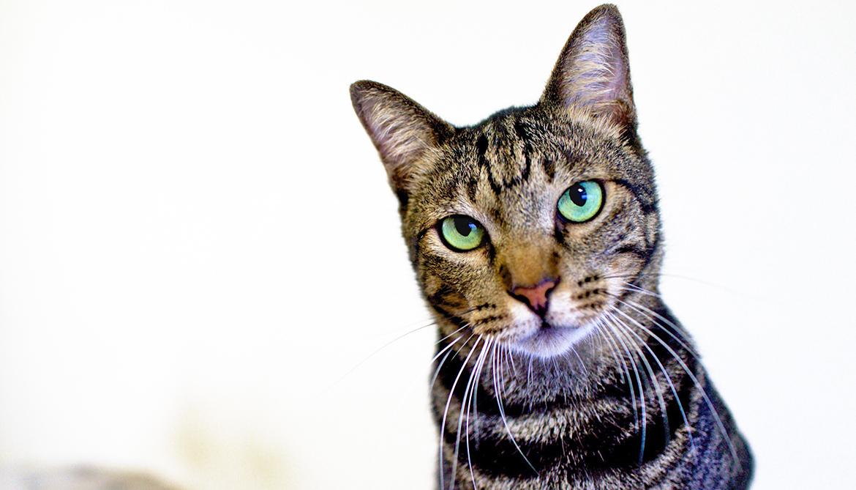 Predator or prey? The eyes have it - Futurity
