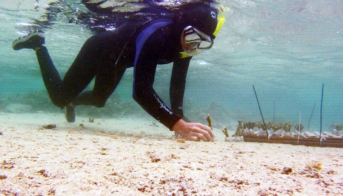researchers sets up coral test