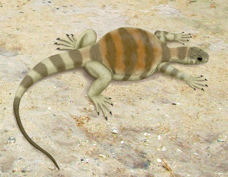 Eunotosaurus africanus restoration
