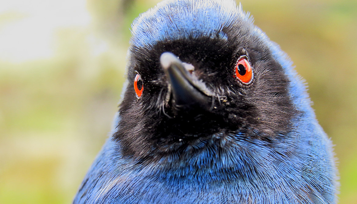 Turning forests into farms wipes out tropical birds