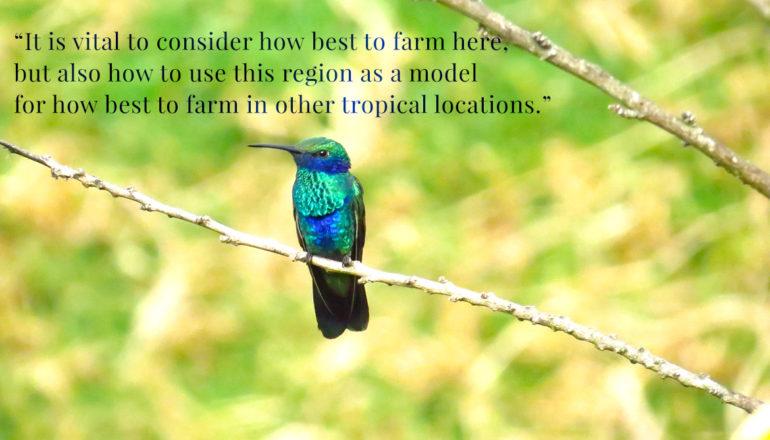 neotropical hummingbird
