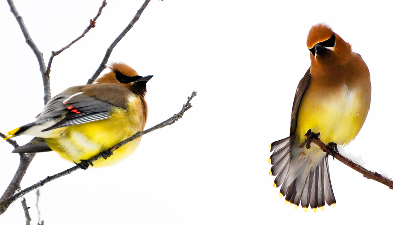 Quiet winter riversides may still be full of birds