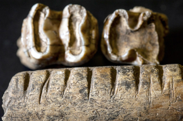 carved jawbone and teeth of a tapir