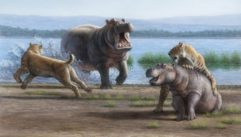 Saber-tooth cats attack a hippo