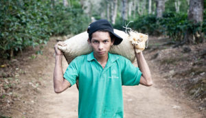 young Nicaraguan man carries coffee beans