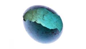 blue egg shell on white
