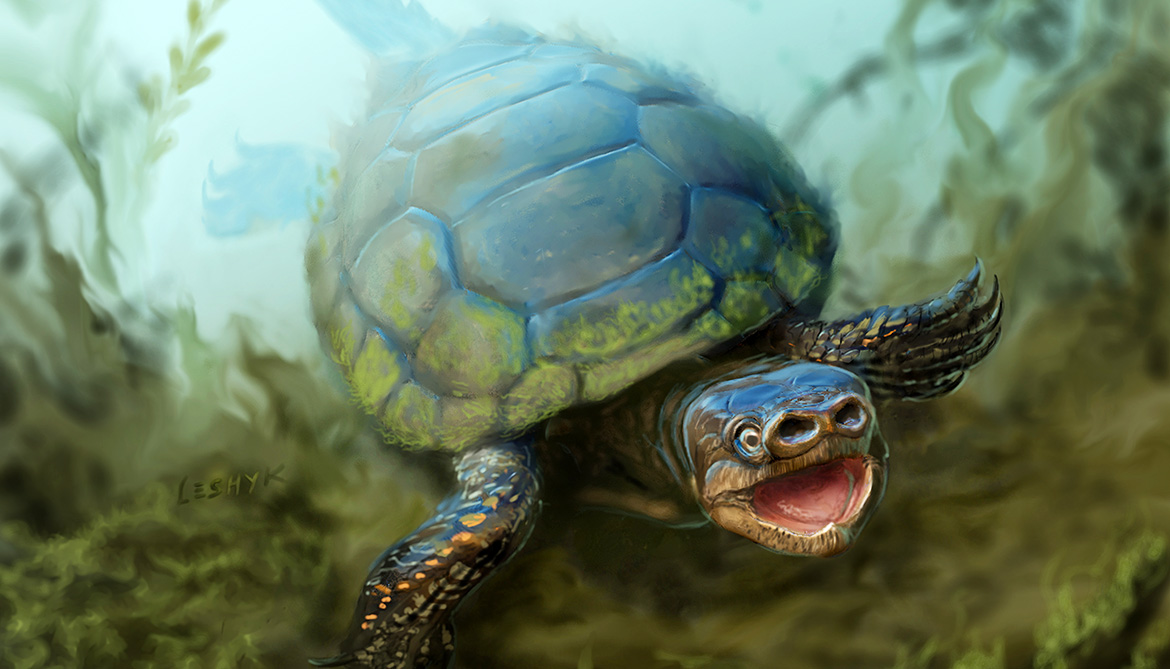 Extinct turtle had a snout like a pig