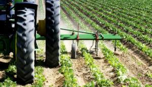 tractor tills crops