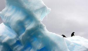 penguins on snow & ice