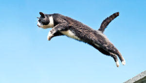 """jumping genes"" jumping cat"