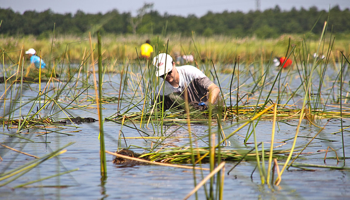 There's a wrong way to save wetlands