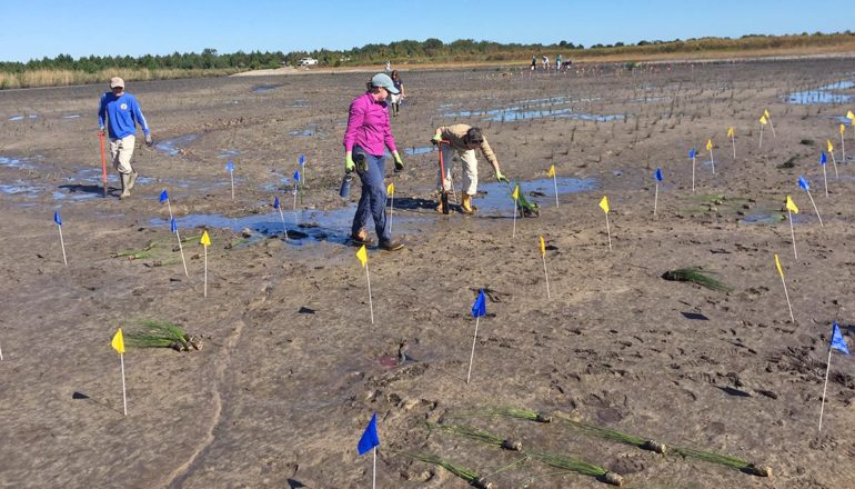 researchers plant a restored wetland test site in Florida