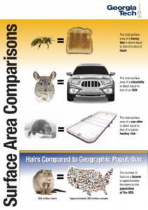 surface area comparison infographic