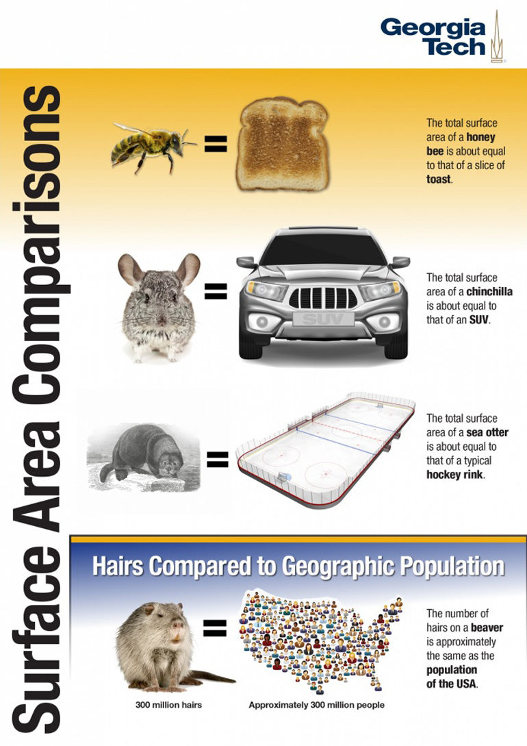 surface area comparison infographic