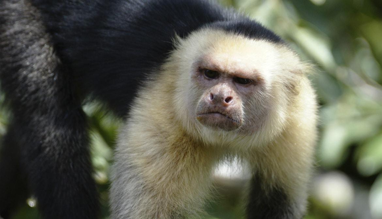 Monkeys get spiteful when others have more