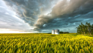 storm above a wheat field