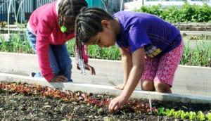 children in an urban garden
