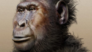 facial reconstruction of Paranthropus boisei