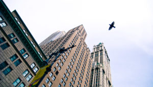 city bird flying