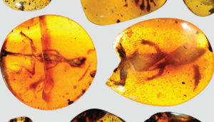 animals in amber