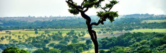 cerrado land in brazil