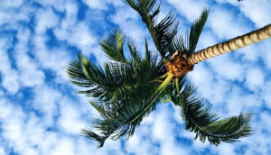 clouds over palm tree