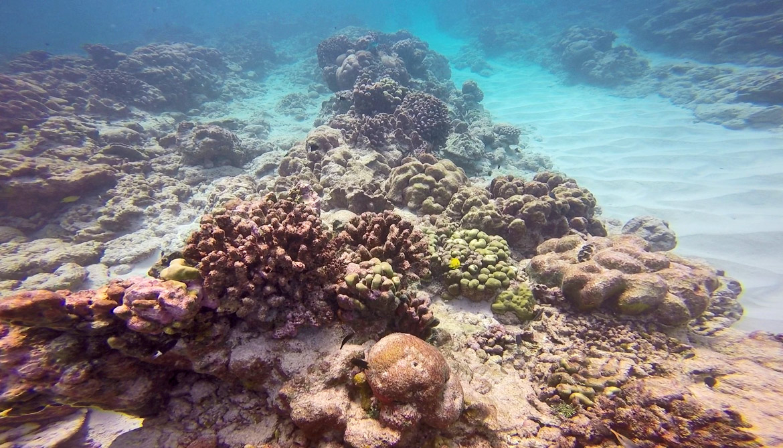 Christmas Island coral reef