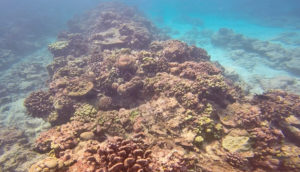 coral reefs at Christmas Island