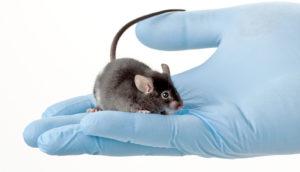 mouse in a researcher's hand