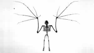bat skeleton in b/w
