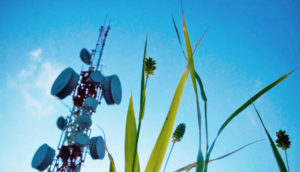 cell tower and grass