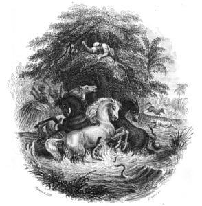 eels attacking horses