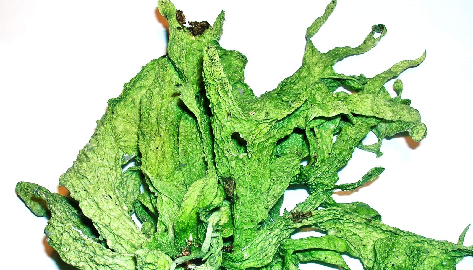 green lichen on white