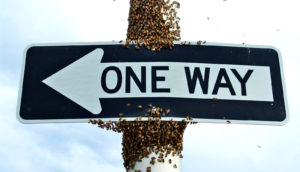 bees on one way sign
