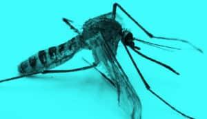 london underground mosquito