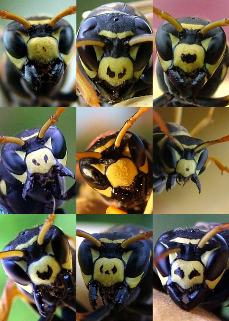 paper wasp faces