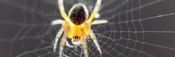 spider in web - spider silk