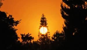 sun behind trees in silo