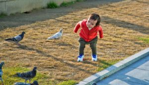 toddler with pigeons