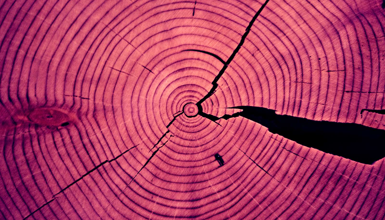 Tree ring warning: Forests may not be able to save us
