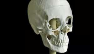 Meritamun skull