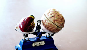 brain and heart on scale