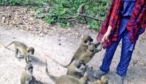 girl feeds green monkeys