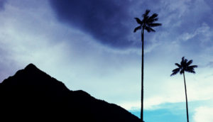 clouds with mountain and palms