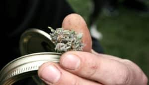 hand holds marijuana